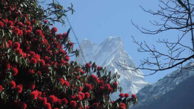 Machapuchare - ABC-Trekking